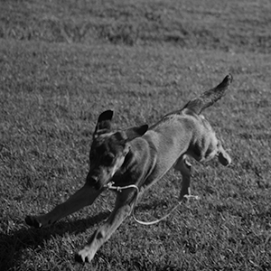 Dog Training Running