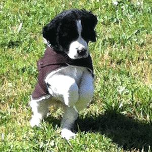 Ipo Dog Training Meaning